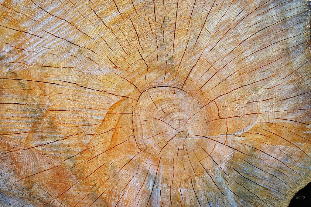 Die Vielseitigkeit des Holzes